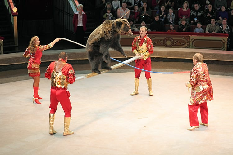 Ringling, Rings in the New Year with a Victory for Animals by Susan Hargreaves