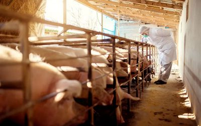 EU & UK Animal Victories to Ban Cages in Animal Farming